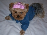 Dog Pet Denim Jacket Coat     Sizes XXSmall - Small
