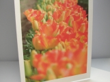 Tulips. Spring Colors. Orange. Photo notecard.