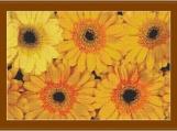Orange Gerberas Cross Stitch Pattern