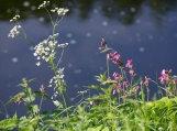 Summer Flowers by the Pond, Photo Print 8' x 6'