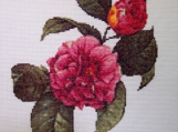 Completed Cross Stitch Picture of Camelias in Bloom