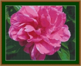Peony Blossom Cross Stitch Pattern