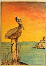Pyrographed Pelican