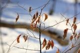 """Winter Branch"" Photo Print 8' x 6'"