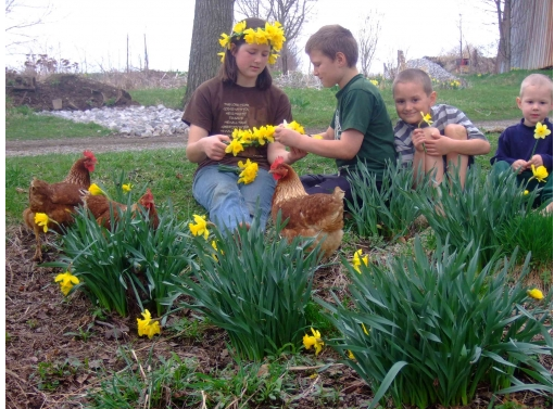 So many ways to celebrate daffodils photo by OhlalaBride for Daffodil Blooms photo contest